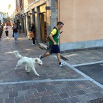 il cane runner